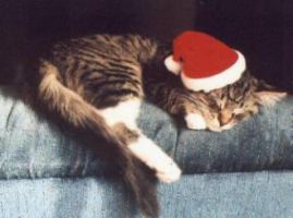 Ryan's Cat in a Christmas Hat by Lady-Binx