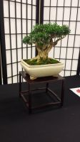 PeppCon 2014 - Small trees. 5 by Jessi-element