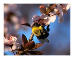 Bumble Bee by aquapell