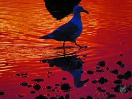 The Martian Seagull by wolfwings1
