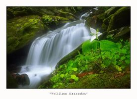 Trilliam Cascades by joerossbach