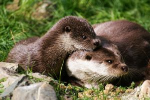 This picture is not like the otters by kaijrae