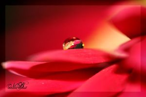 Hot Pink Reflection by Silver-Dew-Drop