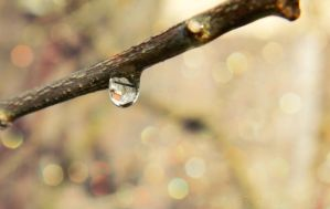 Droplets by FredyHannover