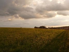 Field at Sunset stock 4 by little-spacey
