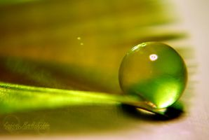 Frog's Egg by ericarad
