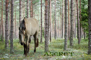 Aseret by dream-sister