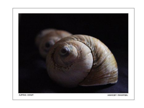 Shell Life by ctw