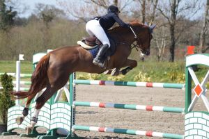 Chestnut Horse - Show jumping stock 5.6 by MagicLecktra