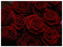 Dark Red Roses by signmeupscotty