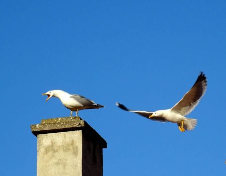 Gulls by helice93