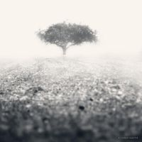 Beyond The Fog by DREAMCA7CHER