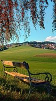 Bench under the tree by patrickjobst