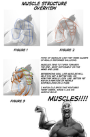 Mini Guide to Muscles by smilingDOGZ