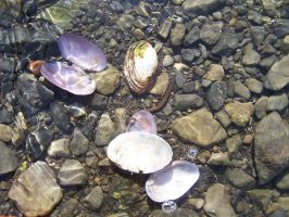 Shells under water 2 by Hermit-stock