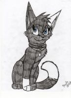my friend as a cat by Icewhisker16