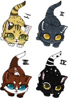 Cat adopts [open] by Cannidae