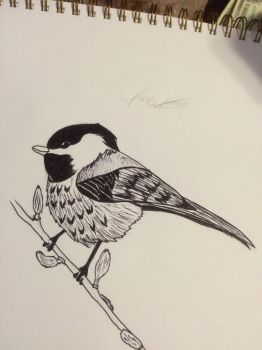 My state bird the chickadee by Flames3531