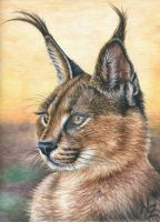 Caracal Sunset by ArtsandDogs