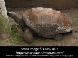 Giant Tortoise Stock 4 by Cassy-Blue
