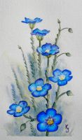 Western Blue Flax by IvieMoon