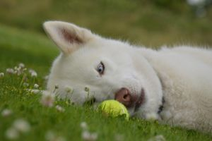 Dont you roll away now tennis ball by Trigger-Photography