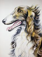 Russian Wolf Hound by HouseofChabrier