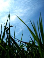 Laying in the grass by ItSurroundsMe