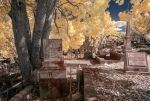 Toowong Cemetary False Colour by nutmeg-42