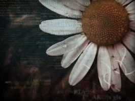 Dirty Daisy WP by Renegade-Hamster