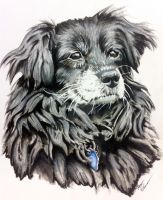 Abbie The Dog Final Version by daylightdreams