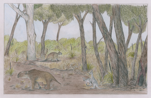 Early Pleistocene Australia - Nelson Bay Formation by Animalistic-Artworks