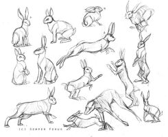 Sketches - Hares/Rabbits by SemperFerus