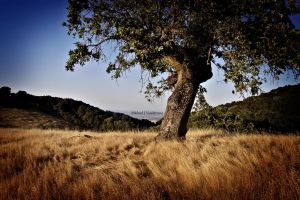 Tree On A Hill by LePhotagDeAbnormal