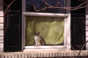 Kitty in the Window by jmoose1