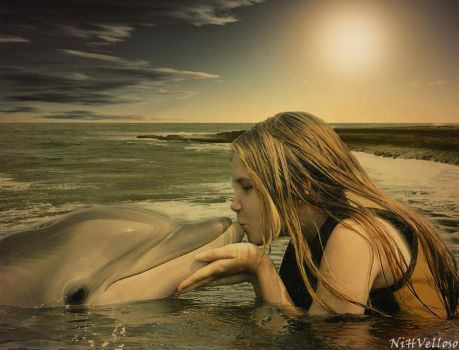 Dolphin by Vellosoo