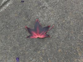 a leaf by voider00