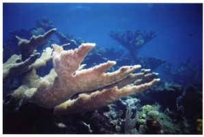 under the sea 5 by dlc-nature-stock