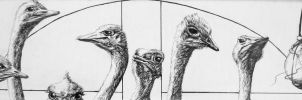 Ostriches in Church by Elsma