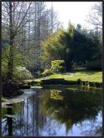 Garden Reflections by wulfster