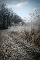 Frosty Landscape Number 2 by Shreever