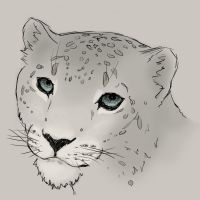 Snow Leopard by Thrissir
