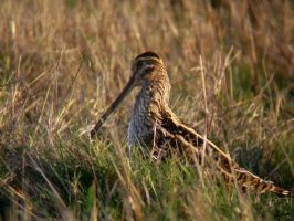 Snipe head up by dea1h