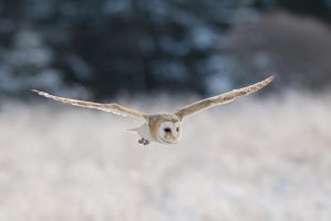 Flying low by Tygrik