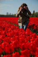 Tulips by photoleto