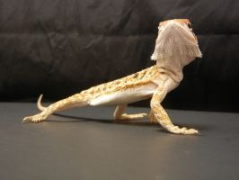 Bearded Dragon 5 by FearBeforeValor