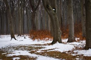Trees 3 by pillendrehr