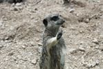 ZSL London Zoo_12 by OneTwoPew