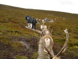 Follow that reindeer by johnfsfreeman