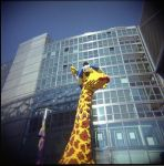la girafe. by toy-camera